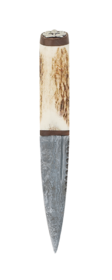 Staghorn Damascus Sgian Dubh Walnut With Thistle